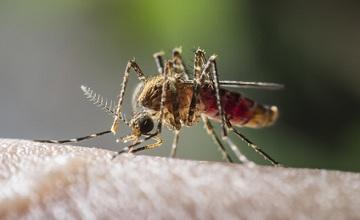 Comment calmer une piqûre de moustique ?